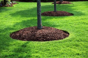 MULCH_AROUND_TREE_MA-300x199